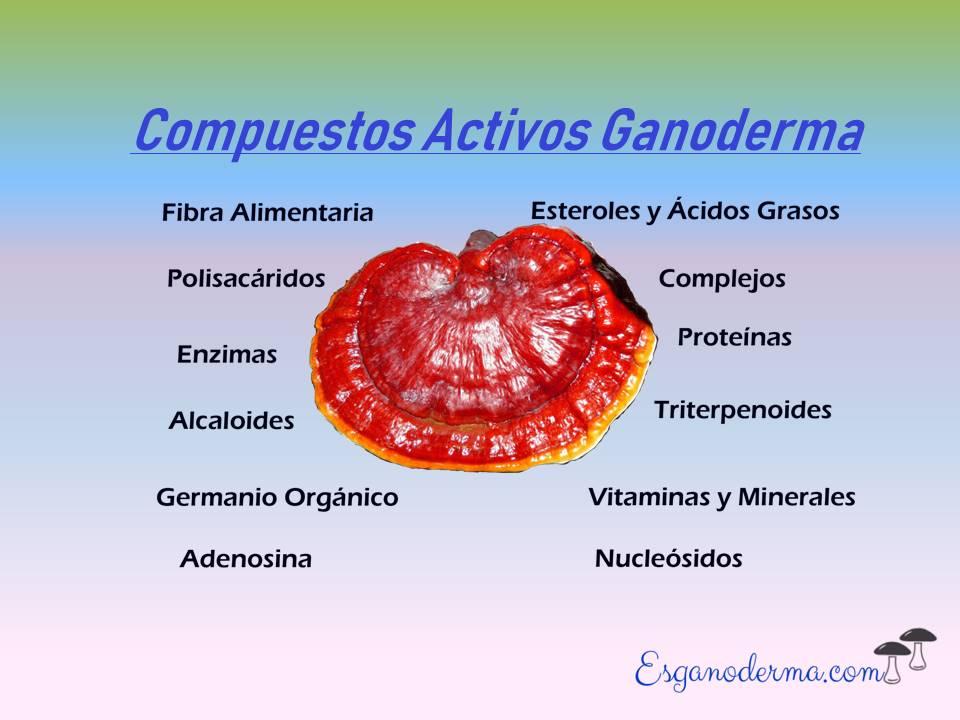compuestos-activos-hongo-de-ganoderma