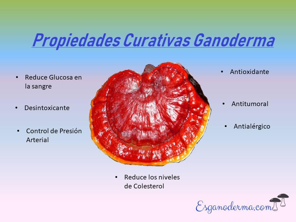propiedades-medicinales-ganoderma